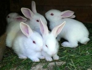 Модульный цех для убоя и переработки кроликов